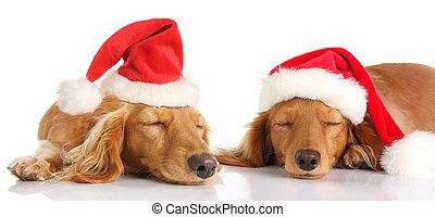 Perros de Navidad de Santa Sleepy