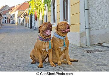 Perros divertidos en la calle