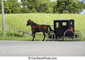personas amish, calesa, su, (mennonite), equitación