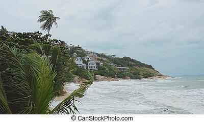 pesado, tropical, árboles, ondulación, palma, sea., frente de la tormenta, delirio, playa