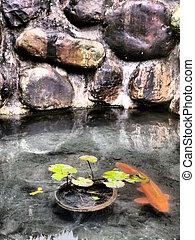 Pescado carpa en un estanque