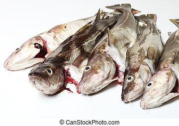 Pescado de bacalao