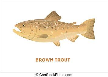 Pescado de trucha marrón aislado.