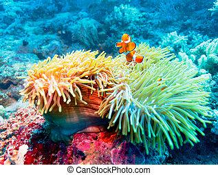 Pescado tropical cerca de coral colorido