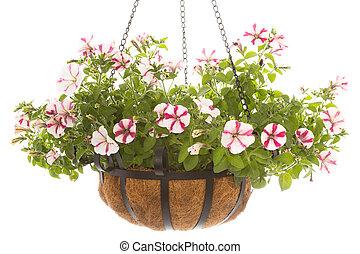 Petunia en cesta