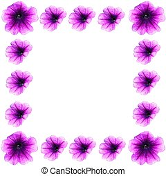 Petunias de la frontera de primavera