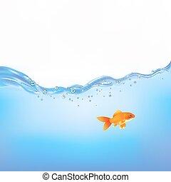 Pez de colores en agua