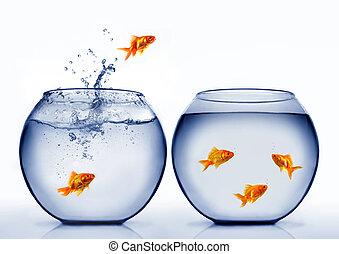 Pez de colores saltando del agua