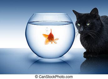 Pez dorado en peligro, con gato negro