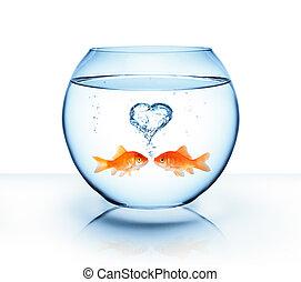 Pez dorado enamorado, concepto romántico
