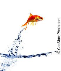 Pez dorado saltando del agua