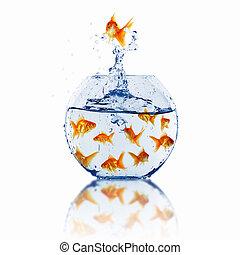 pez, oro, juntos