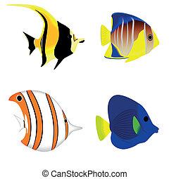 pez tropical, conjunto, aislado