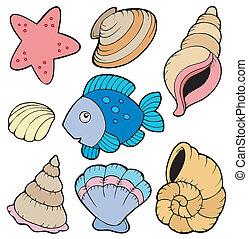 pez, vario, colección, conchas