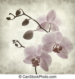 phalaenopsis;, papel, viejo, plano de fondo, textured