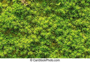 Piedra sobrecrecida con musgo verde en el bosque