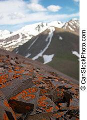 Piedras lichen