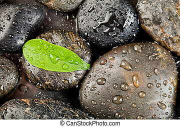 Piedras Zen y plantas frescas con gotas de agua