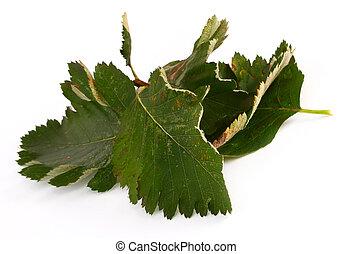 Pile de hojas verdes