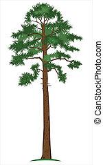pine-tree, vector