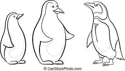 pingüinos de emperador, contornos