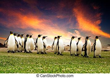 pingüinos, marzo