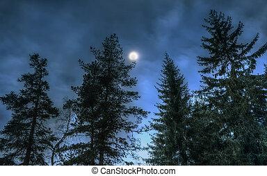 pinos, woods., luna, noche