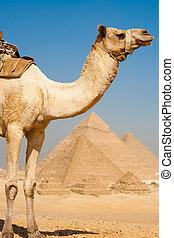 Pirámides de camellos, filas