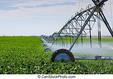 Pivot de irrigación