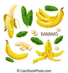 plátanos, aislado, conjunto, blanco, fondo., vector