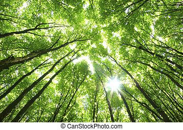 plano de fondo, árboles verdes