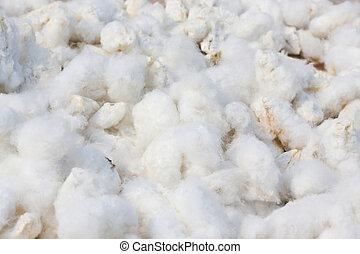 plano de fondo, algodón