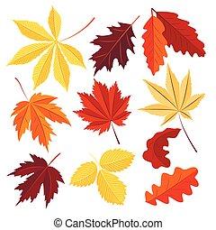 plano de fondo, hojas, vector, aislado, conjunto, otoño, blanco