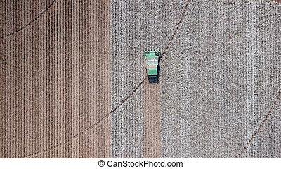 plant., cosecha, agricultura, combine., algodón, field.