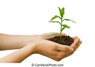 planta, agriculture., mano