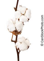 planta, algodón