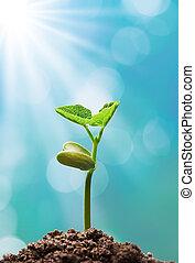 Planta con luz solar