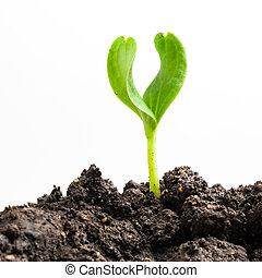 planta, crecer, verde