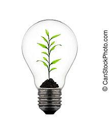 Planta creciendo dentro de la bombilla