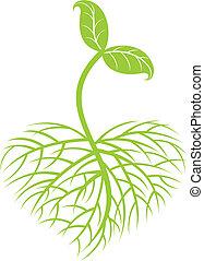 Planta creciente