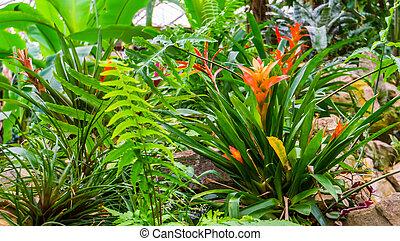 Planta de aire tufted naranja en un jardín tropical, casa exótica popular y planta de jardín