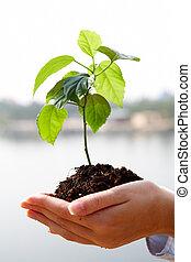 Planta de crecimiento