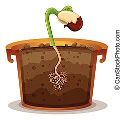 Planta de cultivo en barro