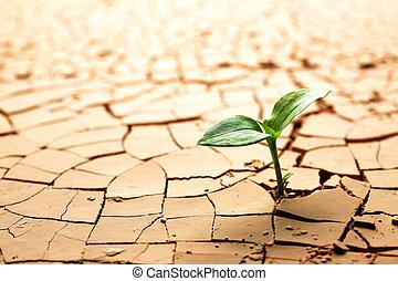 Planta en barro seco