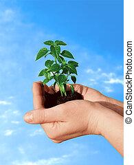 Planta en mano