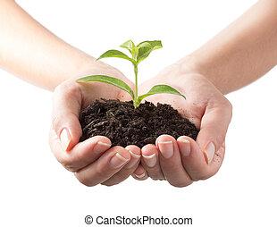 Planta en manos, antecedentes blancos