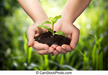 Planta en manos, fondo de hierba