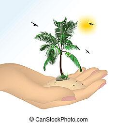 Planta en una mano aislada en el fondo blanco