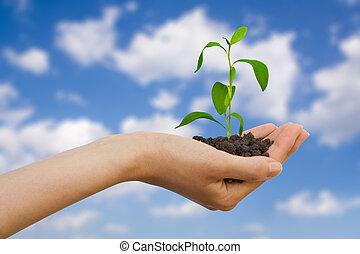 Planta en una mano