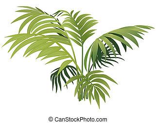 planta, helecho